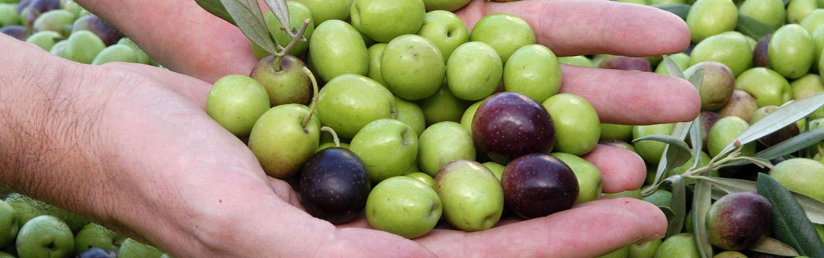 olivas-de-campotoro